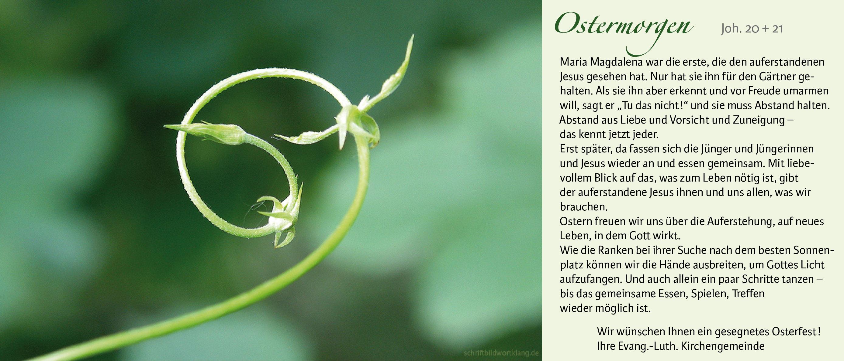 Eine junge grüne Ranke in spiralförmiger Bewegung und ein kurzer Text zu Ostern